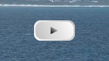 Land Based Whale Watching Video Clip